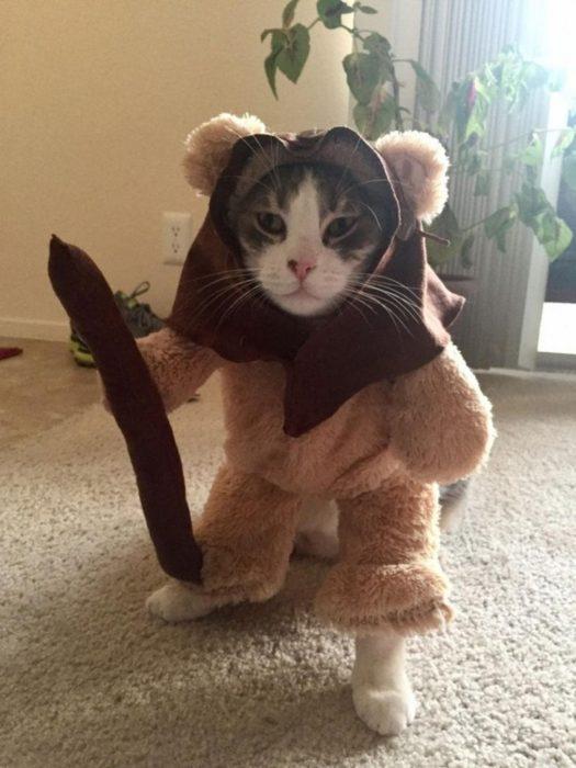 самые дурацкие наряды для кошек