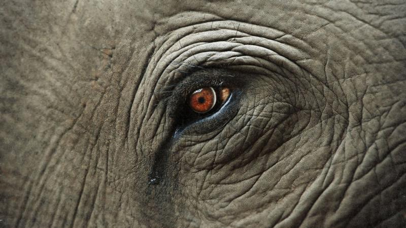 Животные, которые по-настоящему плачут — фото