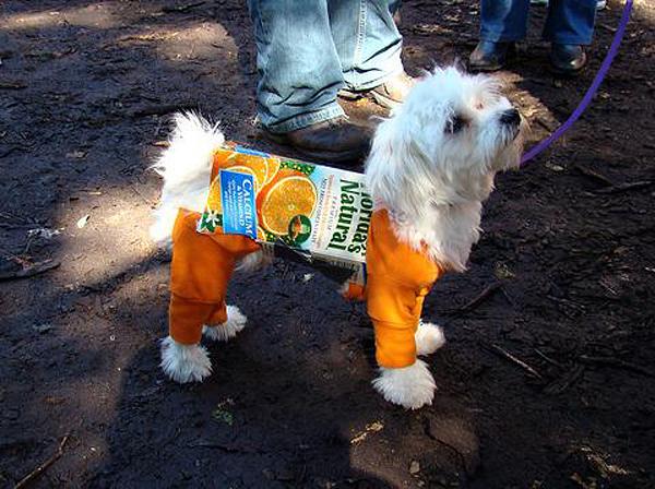 Собака в костюме в виде коробки сока