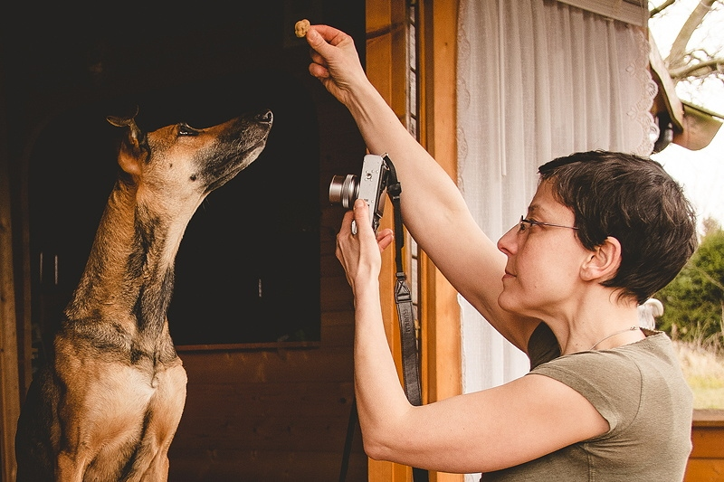 Фотографируем собак: советы, как сделать шедевральные фото