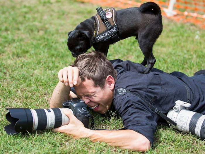 как фотографировать собак