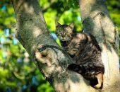 Пенсионер из Луизианы спасает кошек