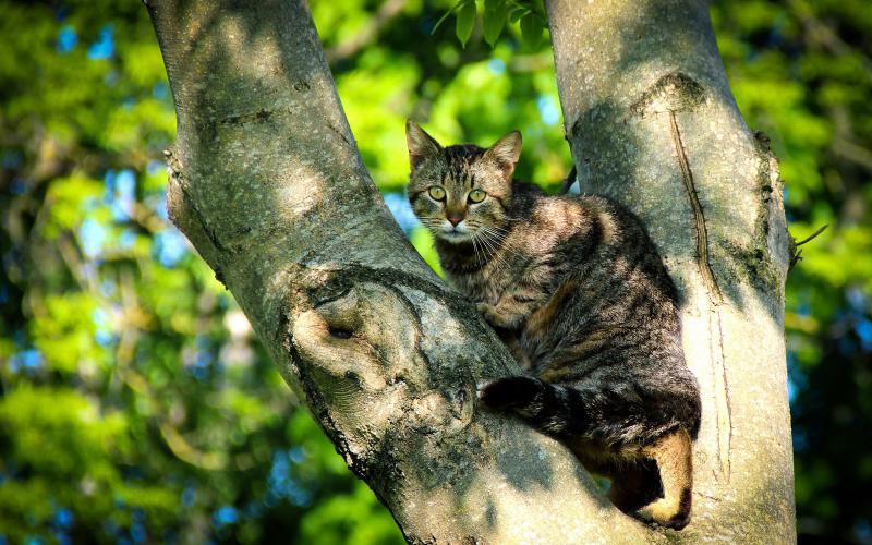 Пенсионер из Луизианы бесплатно снимает кошек с деревьев