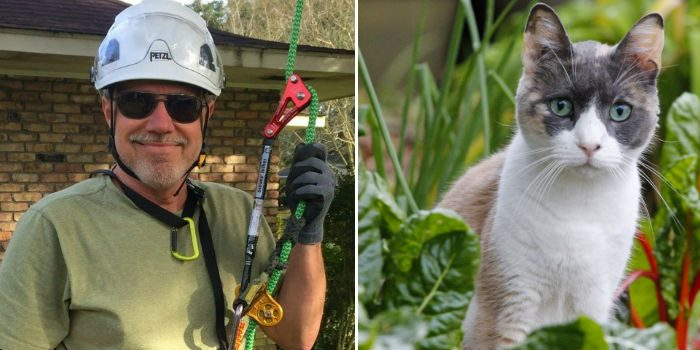 Мужчина спасает кошек с деревьев