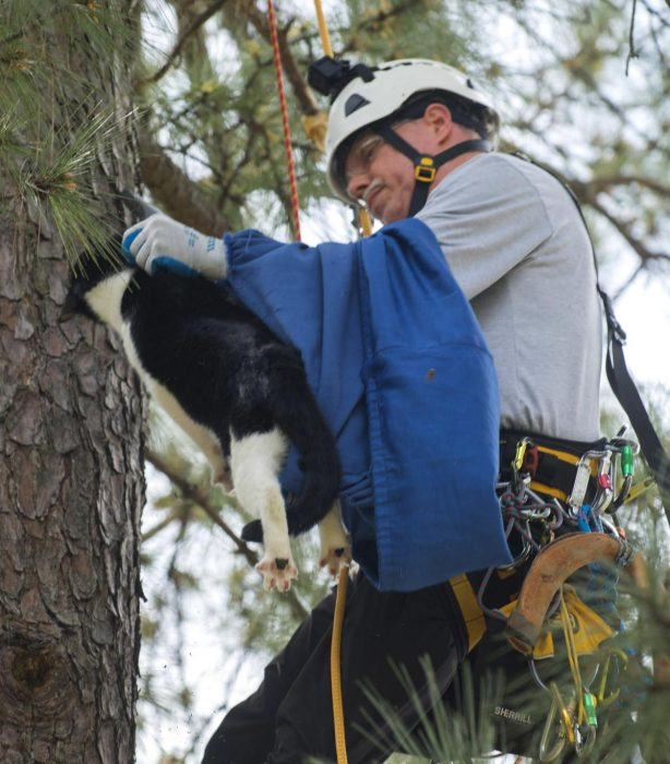 Пенсионер из Луизиана бесплатно помогает кошкам