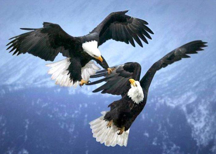 бои животных в дикой природе