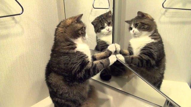 реакция животных на зеркало