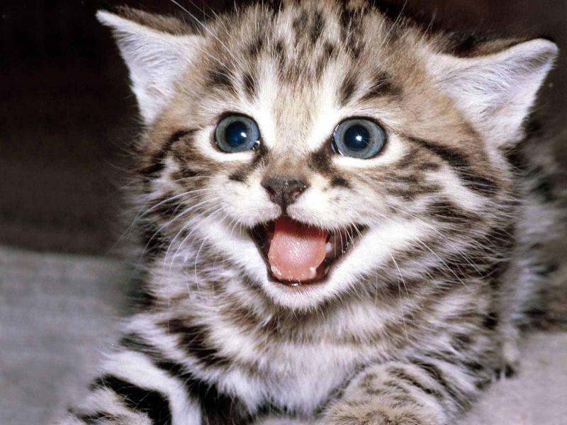 У брошенного котёнка не было практически никаких шансов выжить