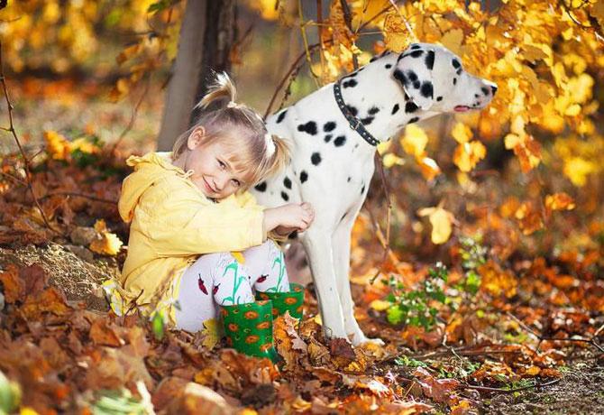 Идеи для осенней фотосессии с домашними животным