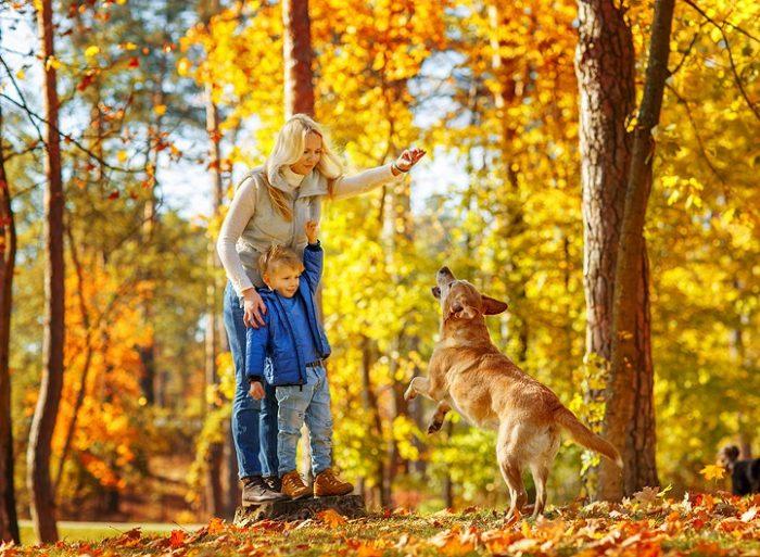 осенняя фотосессия с домашними животными