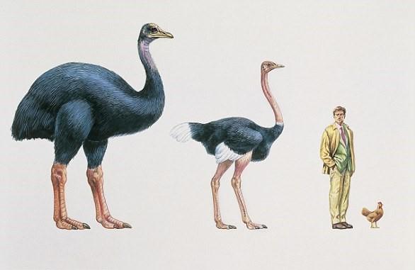 Соотношение роста гигантских птиц и человека