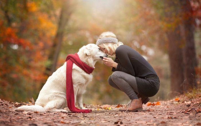 осенняя фотосессия с собакой