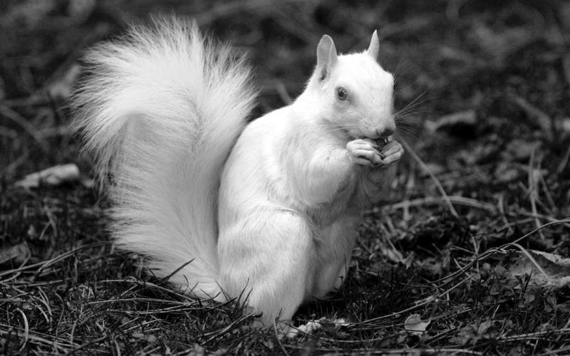 В Великобритании нашли и выходили бельчонка-альбиноса