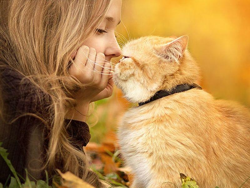 Фотосессия с кошкой: осенние идеи для изумительных кадров