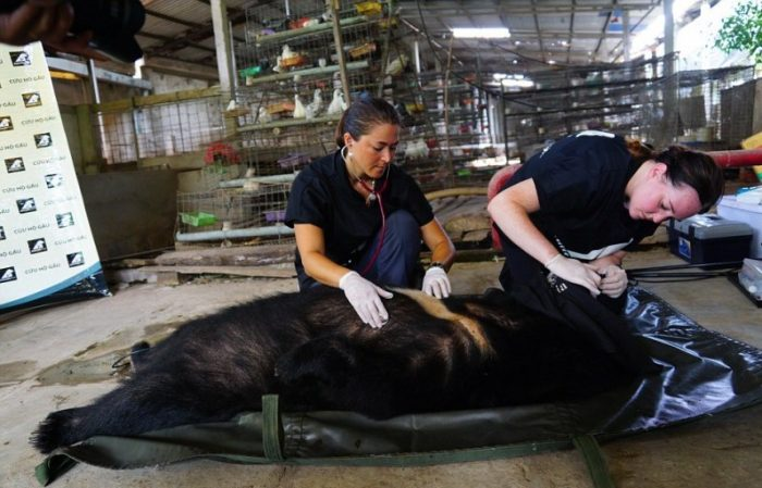 Проведение осмотра найденным медведям