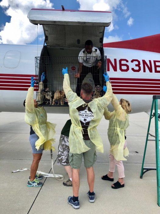 Щенки были переправлены частным рейсом в Чикаго