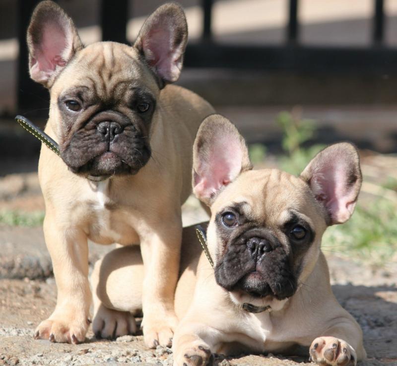 В Техасе полицейский спасли 28 щенков из Украины