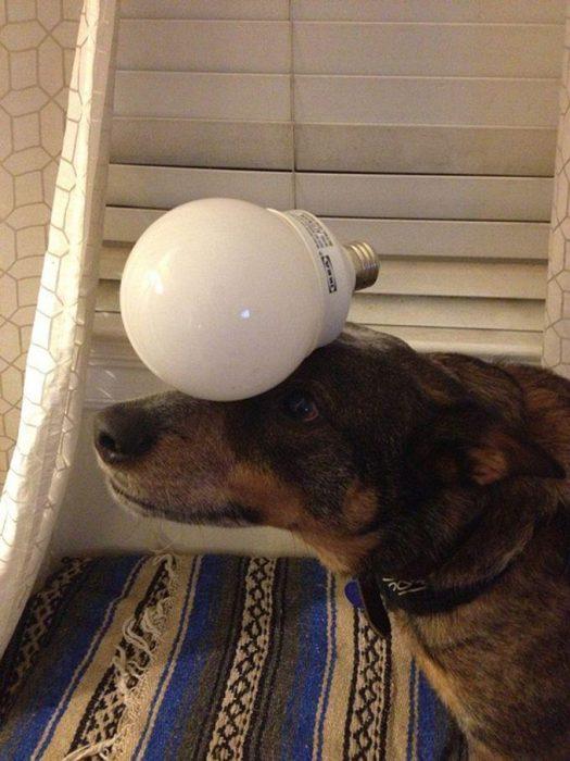 Собака с лампочкой на голове