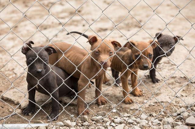 Собаки содержались в плохих условиях