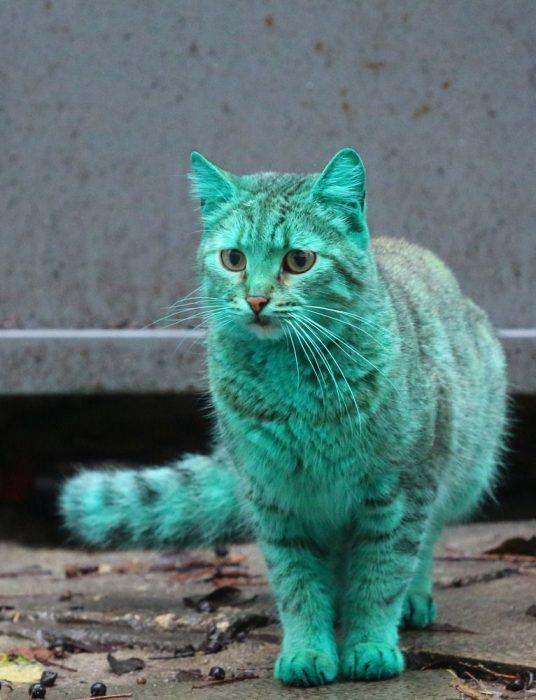 Зелёный кот