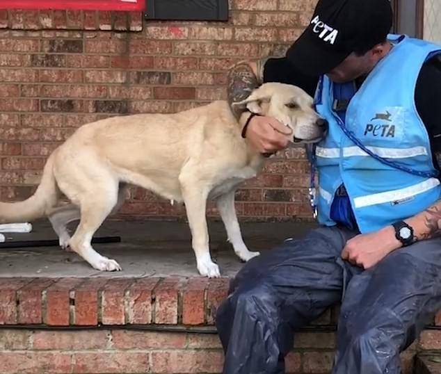 Зоозащитники спасли собаку и переправили в приют