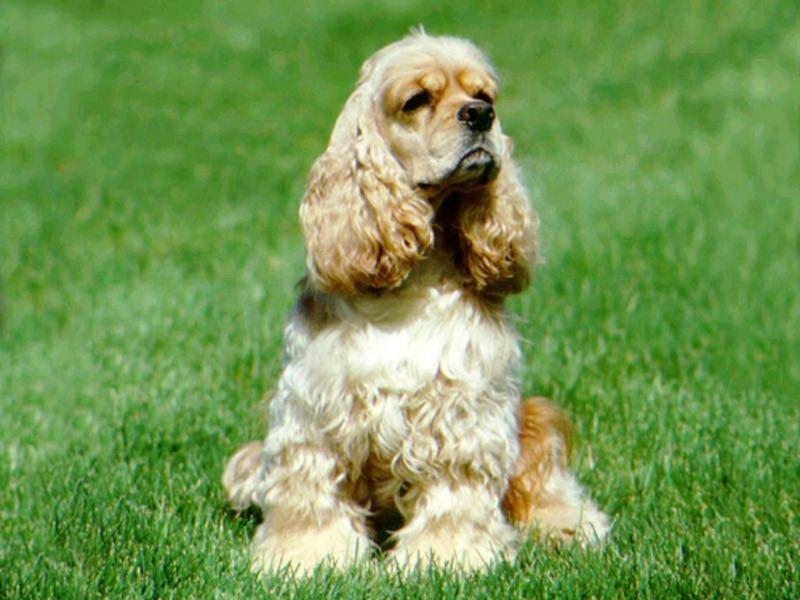 Самая неприхотливая порода собак