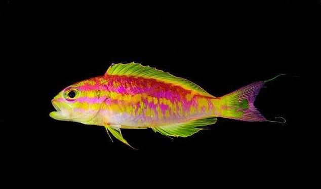 Яркая неоновая рыбка