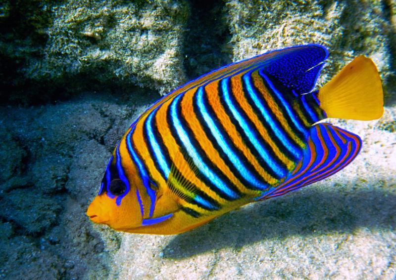 У берегов Бразилии на глубине 120 метров обнаружили необычную рыбку