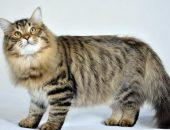 Толстый хитрый кот