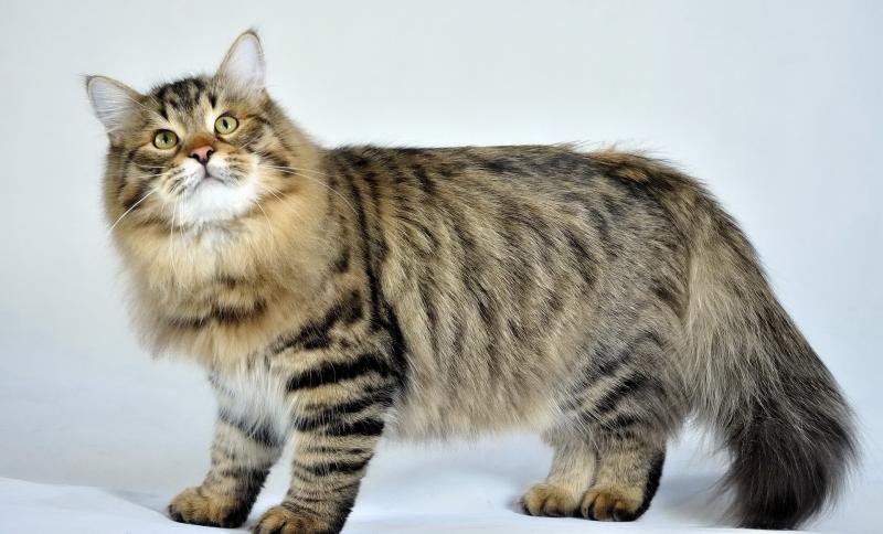 Толстый кот много лет притворялся, что не может пролезть через дверцу