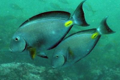 Необычные рыбки в Чёрном море
