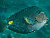 Тропические рыбки в Чёрном море