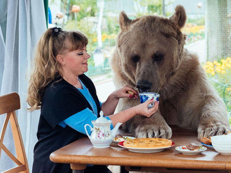 Как медведь живёт в обычной семье