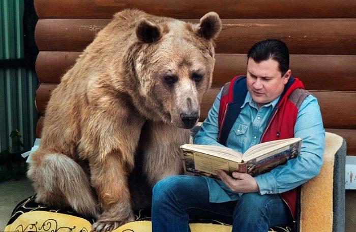Медведь слушает сказку