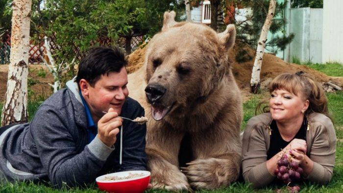 Медведь Степан есть с ложки