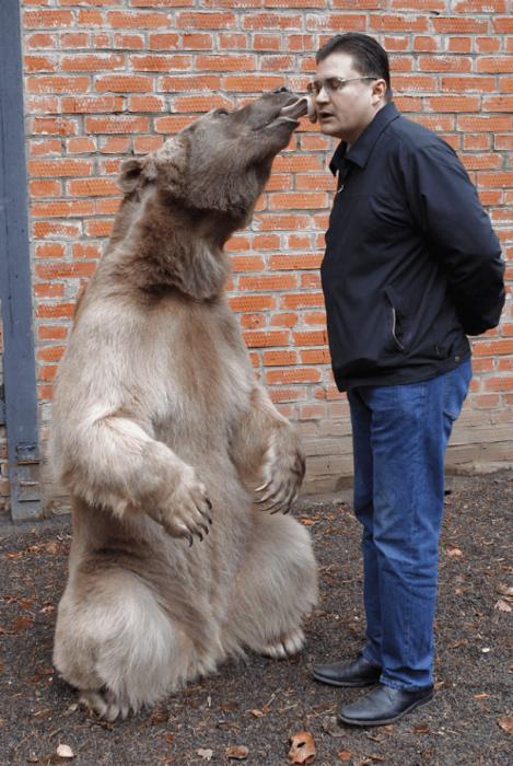 Медведь Степан и Юрий Пантелеенко
