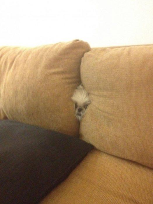 удачная маскировка собак
