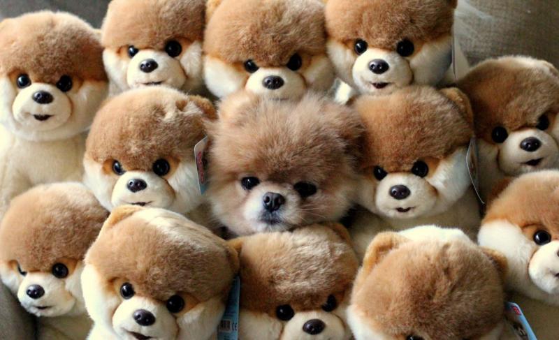 Удачная маскировка собак — фото