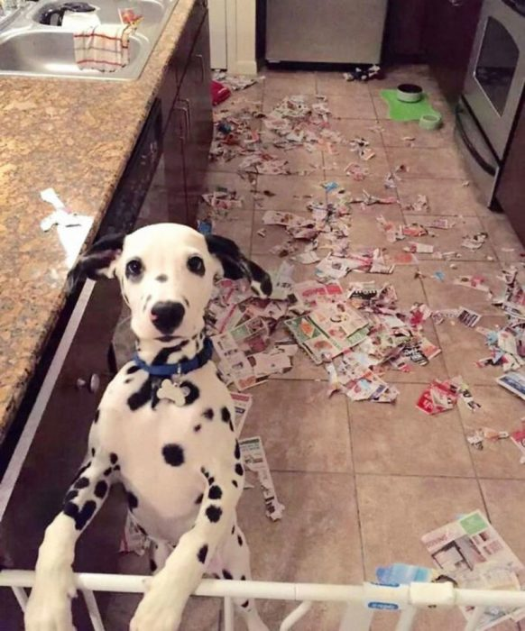 что делают собаки когда никого нет дома