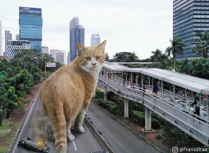 гигантские коты захватили мир
