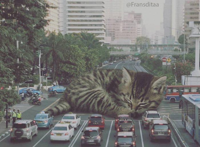 гигантские коты захватили миргигантские коты захватили мир