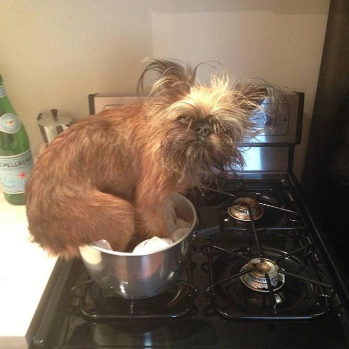 Собака в кастрюле