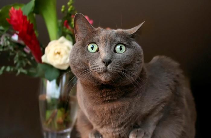 У кошки интригующий вид