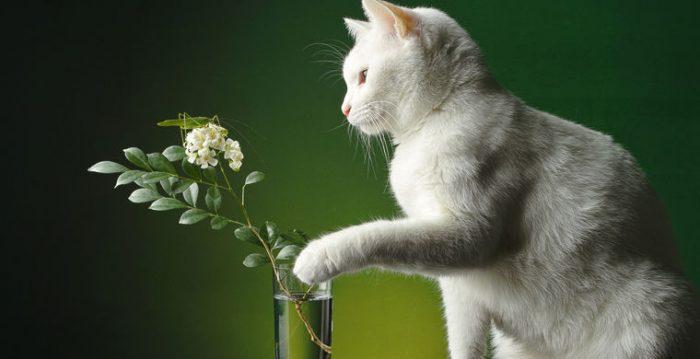 Киска собирается скинуть вазу на пол
