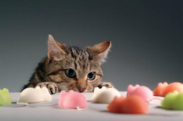 Котик перед игрушками в виде мышей