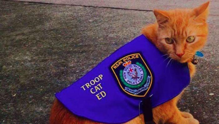 Патрульный кот