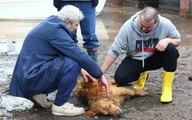 Вокруг пса стали собираться люди