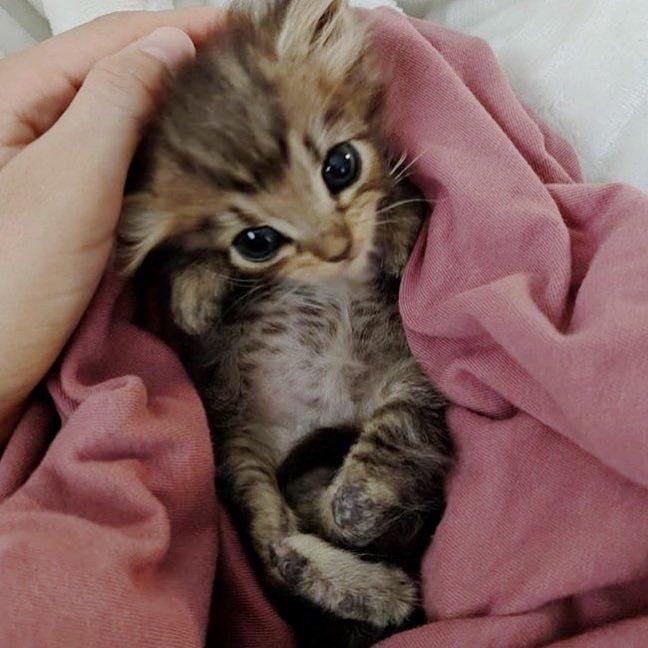 Котёнок с вывернутыми лапками