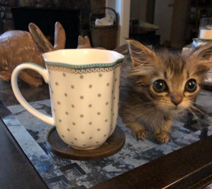 Котёнок рядом с чашкой