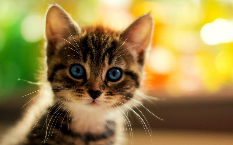 Девушка спасла котёнка, которого не замечали прохожие